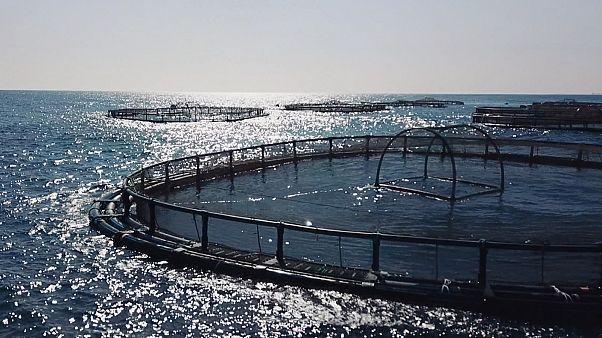 Τα ψάρια από ιχθυοκαλλιέργειες είναι το μέλλον