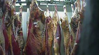 Poland sick cow slaughterhouse: meat from closed abattoir 'sold to ten EU countries'