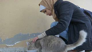"""""""من الجيد العناية بالقطط، ومهم أيضا أن تصل المساعدات للمحتاجين من الناس"""""""