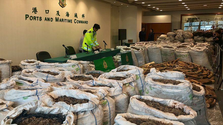 Hong Kong'da 8 milyon dolar değerinde pangolin ve fildişi yakalandı