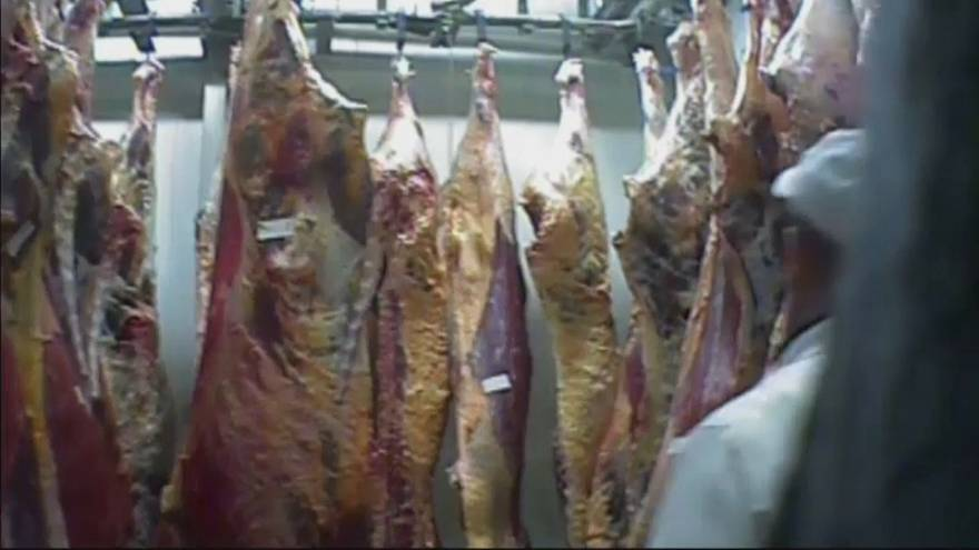 Poland sick cow slaughterhouse: withdrawals of meat exported to EU 'ongoing'