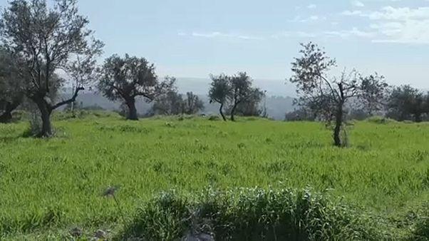 """شاهد: """"مزرعة أمُّ سليمان."""".. ملتقى عشّاق الطبيعة المحاطة بالمستوطنات الإسرائيلية"""