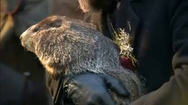 La marmota Phil pronostica una pronta primavera en EE:UU