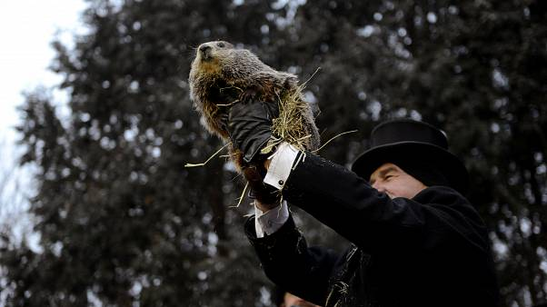 Groundhog Day: 'Punxsutawney Phil' predicts early spring