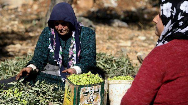 Afrin zeytini İsviçre Parlamentosu'nda: Türkiye kendi markasıyla satıyor, soruşturulsun