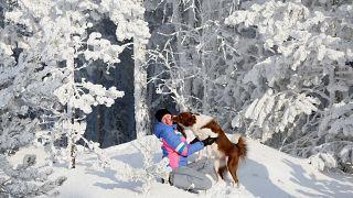 شاهد: تطبيق جديد لتبني الكلاب في ليتوانيا