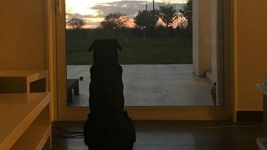 سگ امیلیانو سالا در چشم انتظار بازگشت صاحبش است
