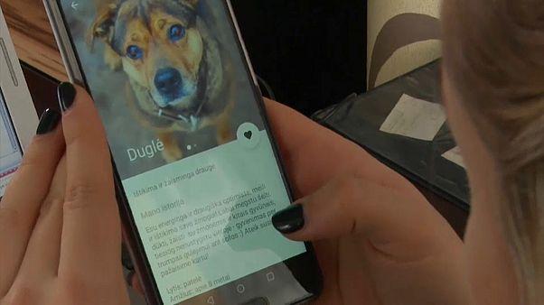 Tinder для собак из приюта