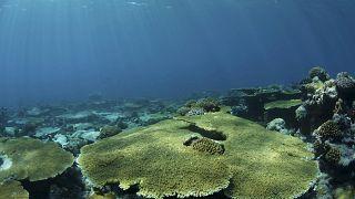 Egyre kékebbé válnak a világ vizei a klímaváltozással