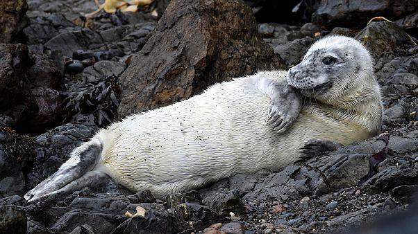 سلطات نيوزيلندا تبحث عن صاحب شريحة تخزين عثر عليها في فضلات فقمة مجمدة