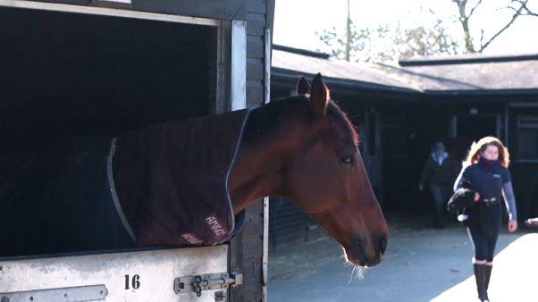 Grossbritannien: Pferdegrippe-Epidemie befürchtet