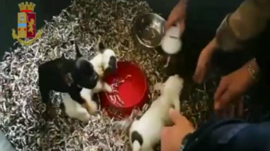 Buy for €30, sell at €1,000: Italy police bust puppy trafficking ring