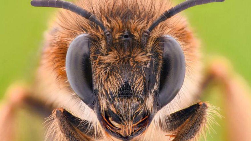 Arılar toplama ve çıkarma işlemi yapmayı öğrendi