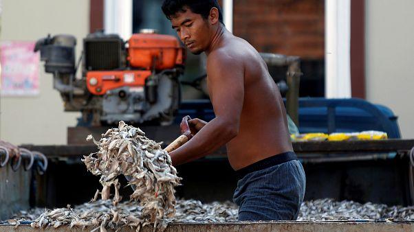 Tailândia combate pesca ilegal