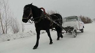 """Unterwegs mit 1 PS: Ein Lehrer baut einen """"Pferdewagen"""", um dem Winter zu trotzen"""