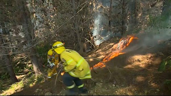 Новая Зеландия: лесной пожар не утихает