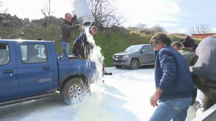 Sardinian farmers destroy milk in protest over falling prices