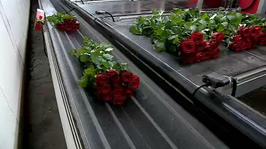Flower imports to the UK could become slower and more expensive in the wake of a hard Brexit