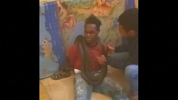 Αστυνομικοί χρησιμοποίησαν φίδι για να αναγκάσουν ύποπτο να ομολογήσει