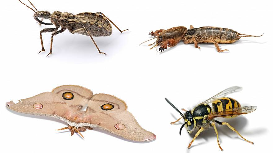 Insect Apocalypse: 40% of world species threatened with extinction thumbnail