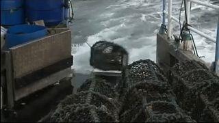 Studie: Schweden größter Raubfischer in der EU