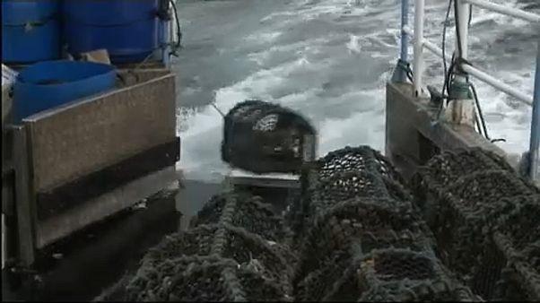 Quotas de pesca pouco sustentáveis na Suécia