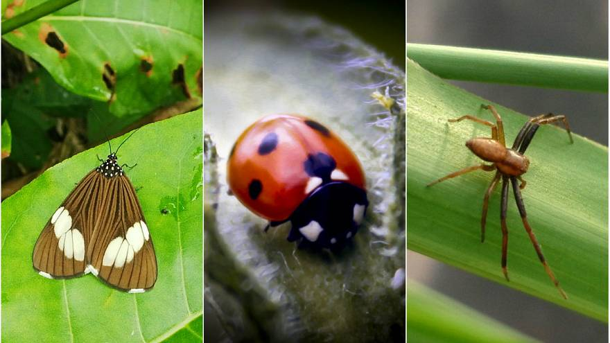 Araştırma: 20-30 sene içerisinde böceklerin yüzde 40'ı yok olabilir