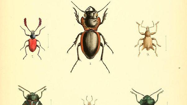 أكثر من ثلث أنواع حشرات العالم مهدد بالانقراض بسبب الإنسان