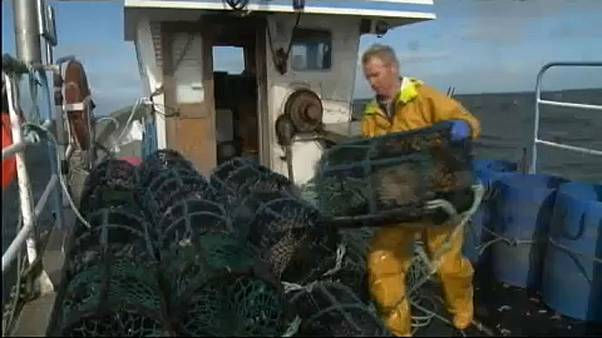 Sweden, UK, Ireland top Northeast Atlantic overfishing 'shame' list