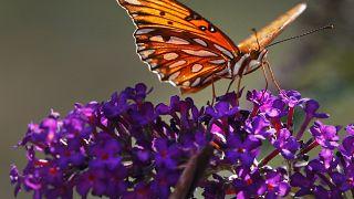 Ijesztően nő a rovarok pusztulásának mértéke