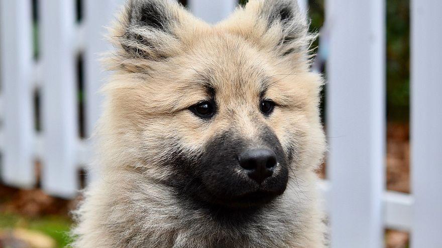 بلدية فرنسية تصدر قراراً ضدّ الكلاب النابحة