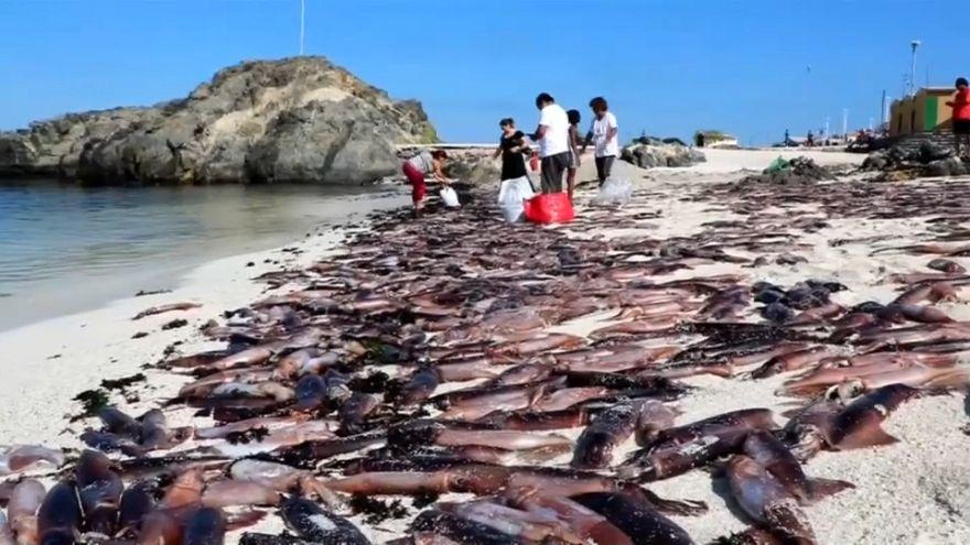 Aparecen miles de peces muertos en una playa de Chile