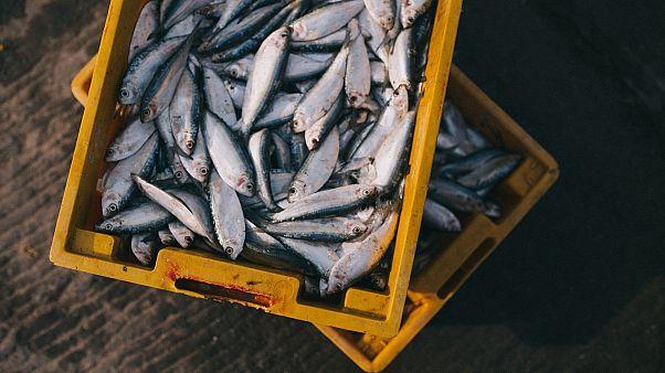 اتفاقية أوروبية مغربية لتأييد مصائد أسماك في مياه الصحراء الغربية