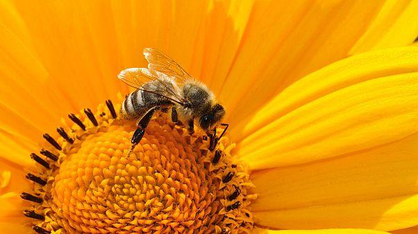 Egymilliónál is több alírást gyűjtöttek Bajorországban a rovarpusztulás feltartóztatásáért