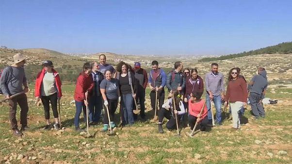 مجموعة من الطلاب يساعدون فلسطينيين في إعادة زراعة شجر الزيتون