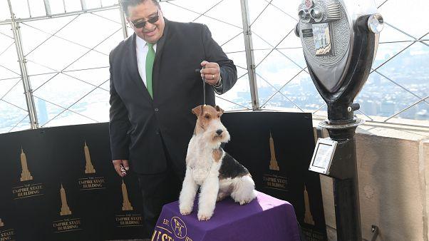 Ο «King» νικητής του σαλονιού σκύλων στη Νέα Υόρκη