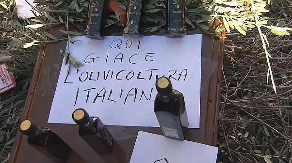 Olio e latte, i grandi problemi dell'agricoltura italiana