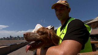 L'Opéra de Sydney engage des chiens pour protéger les touristes des mouettes