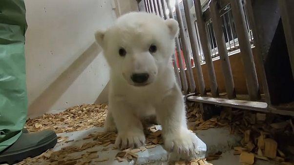Eisbärenbaby: Ein großes, starkes Mädchen!