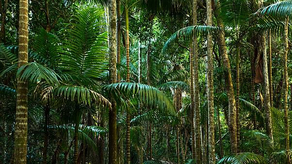 Cinsel şiddet hükümlüsü 'İtalyan Tarzan' saklandığı ormanda yakalandı