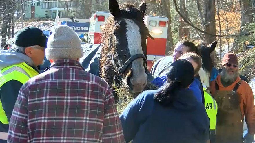 شاهد: إنقاذ حصانين من بحيرة متجمدة في بنسلفانيا