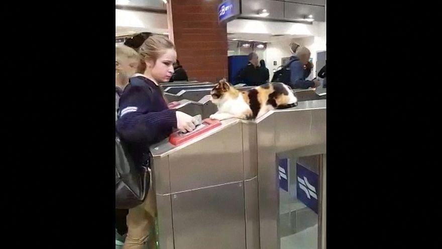 القط عند ماكينة التذاكر