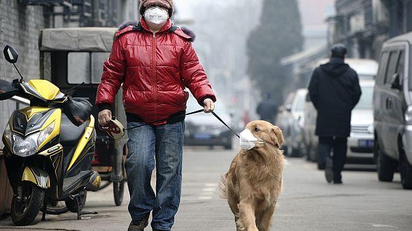 A levegőszennyezés mára több ember halálát okozza, mint a háborúk vagy a dohányzás