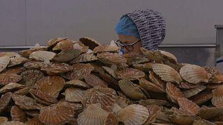 Meeresfrüchte: Gefangen zwischen EU und GB