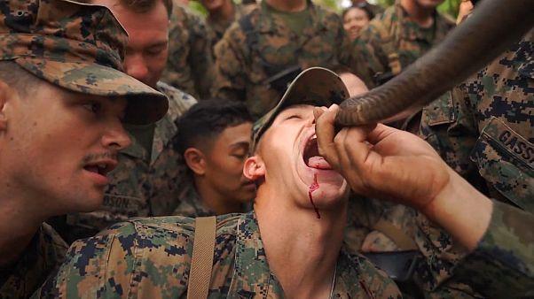 Αμερικανοί πεζοναύτες εκπαιδεύονται πίνοντας αίμα κόμπρας