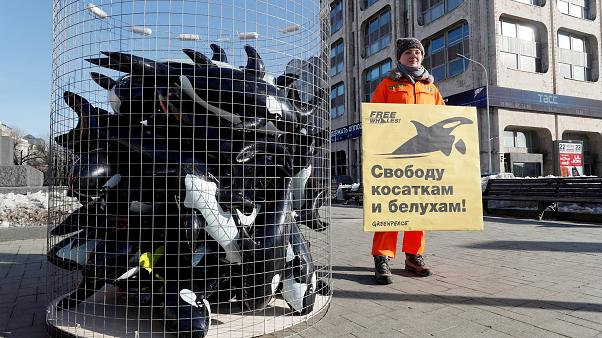 Акция в защиту косаток и китов в Москве