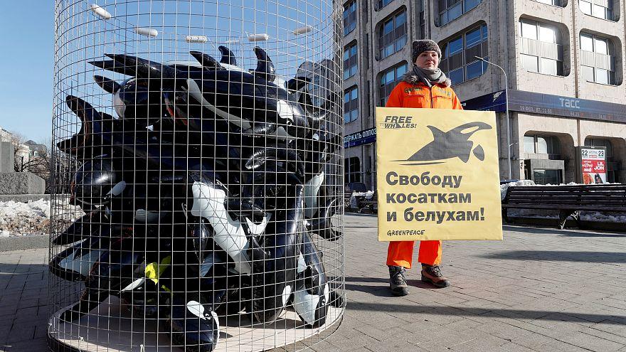 Proteste gegen russische Walgefängnisse