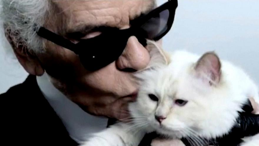Milliókat örökölhet Lagerfeld macskája