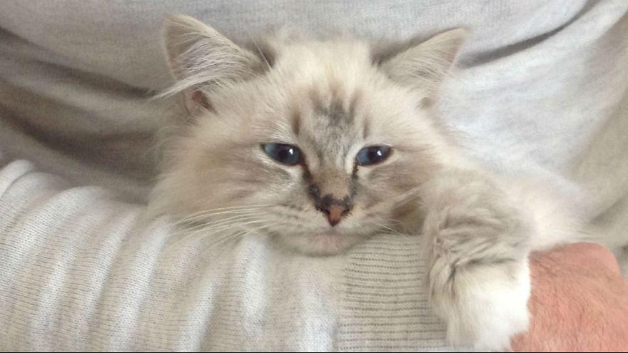 شوپت، گربه پولدار کارل لاگرفلد