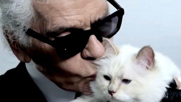 تشوبيت قطة لاغرفيلد